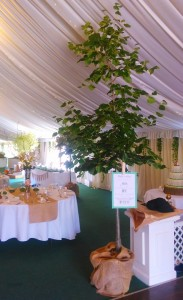 "Trees used to add that extra touch in the main ""Chestnut Barn"" for the wedding reception."